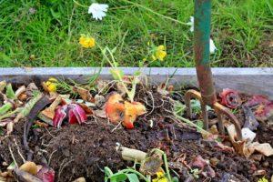 5_kompost_orez